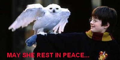 Hedwig - Harry Potter - owls in cinema