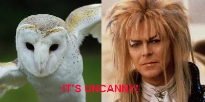 Labyrinth - owls in cinema